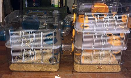 deux cages hamsters connectés