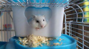 cage trois étages pour hamster