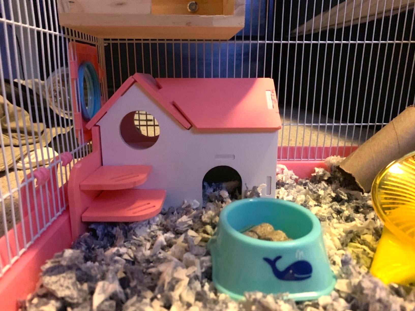 maison bois hamster nain