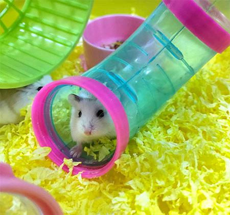 tube hamster bas prix
